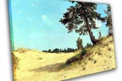 Сосна на песке